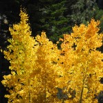 AutumnwebDSCN4780 copy